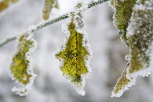 Frozen Leaves by Scorpidilion