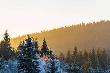 Forest Sun by Scorpidilion