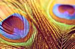 Sunstruck : Wallpaper by Naphartiri