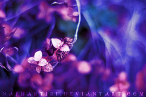 Enchanted by Naphartiri