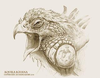 Aquila Iguana by zuckerglider