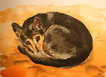 black dog by jokada