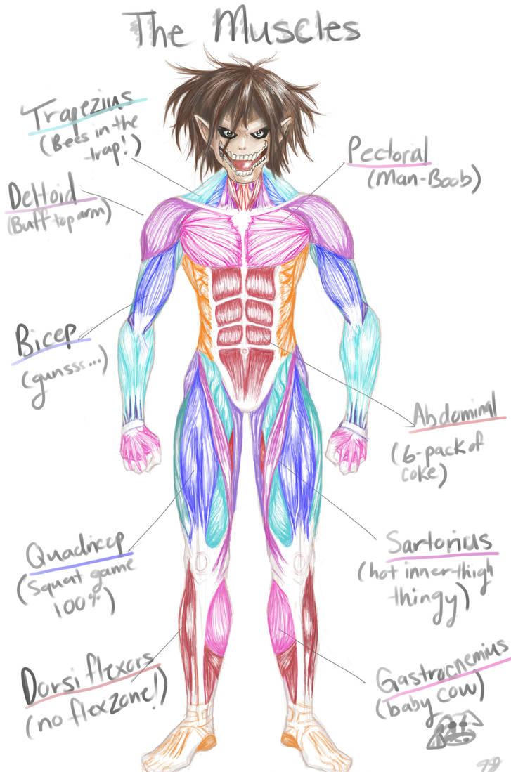 Jaeger Bombastic Muscles By Animaya25 On Deviantart
