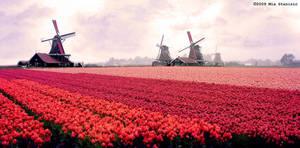 Holland by MiuwMiuw