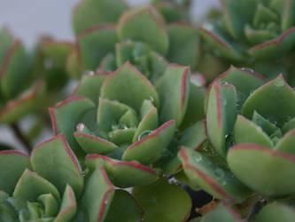 succulents by HeyEmmie