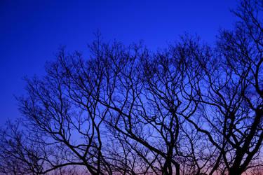 The Tree by HeyEmmie