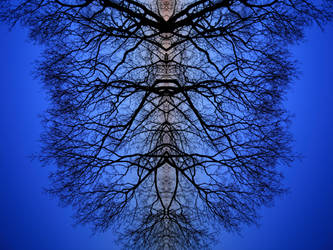 double tree by HeyEmmie
