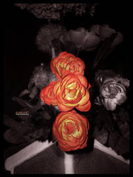 Blossom by Metal-CX