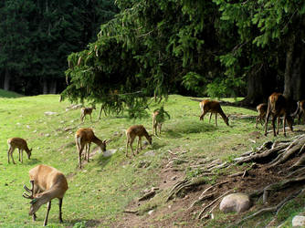 Deers by edelweiss26