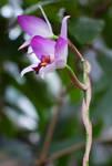 Flower by danielwessel