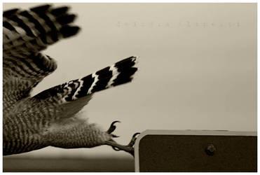 Flying Vs. Falling Two by eXsanguinousCorpse
