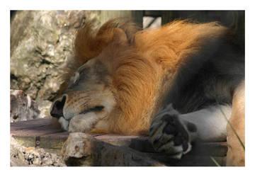 Sleepy Time by eXsanguinousCorpse