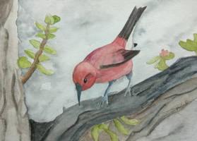 Red bird by MeloDinosauria