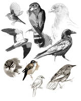 Raptors and Warblers study by wildartguy