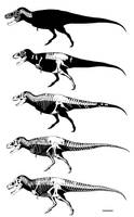 Tyrannosaurus skeletons by GetAwayTrike