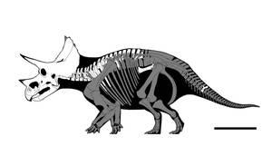 Ostrom's Triceratops by GetAwayTrike