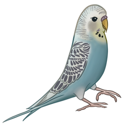 Bradley the Budgerigar by cheezeEGGSTREEME