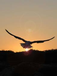 Eagles Sunset by saphfigher