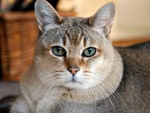 CatFury23's Profile Picture