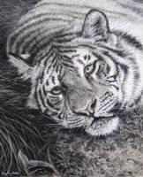 Tiger (pastels) by AngelaMaySmith