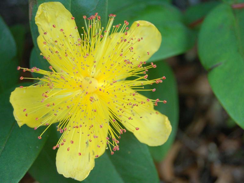 Star Shaped Yellow Flower By Ewensimpson On Deviantart