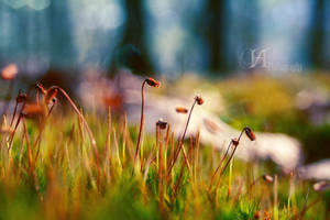 Spring is arriving. by DarknessangelX