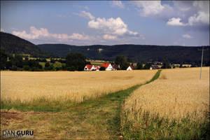 Fields by RoqqR