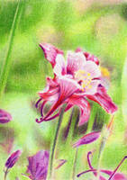 SOLD - Drawn to Help 4.2: Aquilegia by theperian