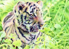 10.5 Technicolour Tiger Cub by theperian
