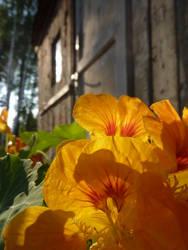 Orange Summer by MistressCurlyLocks