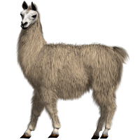 Lovable Llama Test by KickAir8P