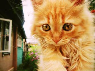 Ginger cat by elenastupishina