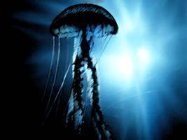 Jellyfish by AllForHim1616