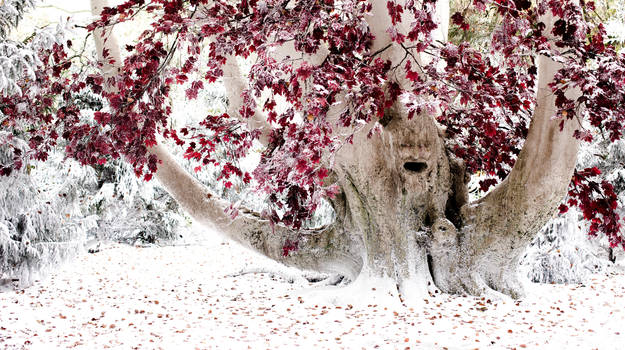 Weirwood Tree - Game of Thrones by GOTstockimages