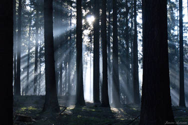 foggy forest by Janine-Autumn
