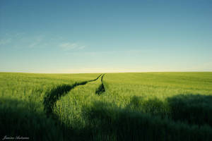 field by Janine-Autumn