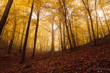 Forest 17 by Janine-Autumn