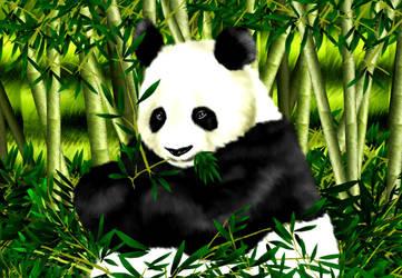 Panda Panda by MobileSuitGio