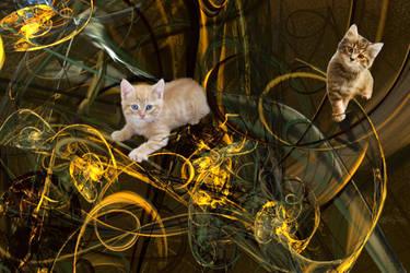 kittens playing by tsahel