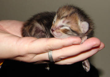 Kitten by titania86