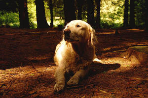 soft forestlight on dogs face by Ailime-Ael