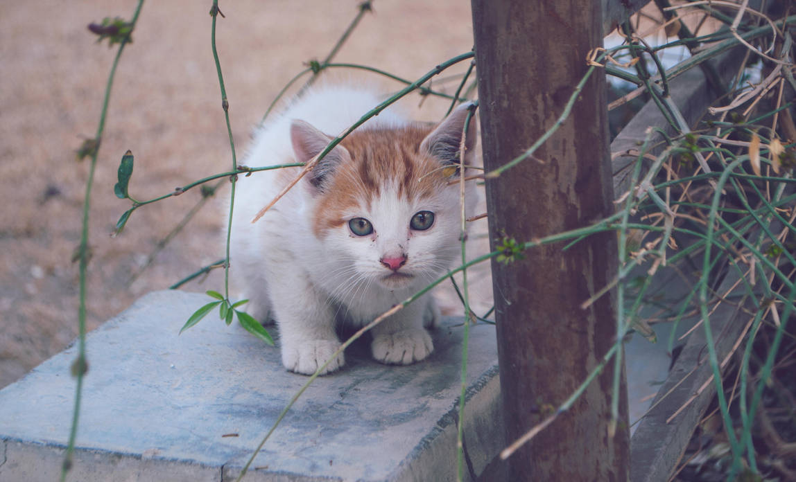 Kitten by JUguLAR8Vein