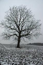 Winterborn I by Freak-of-Noize