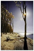 sunlight tree by blackdaddy