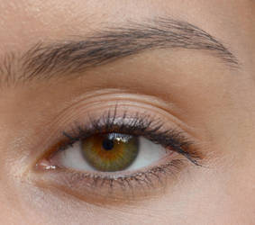 Portrait tutorial eye reference by VectorProfessor