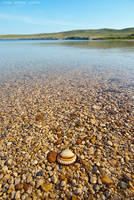 The shell by ivancoric