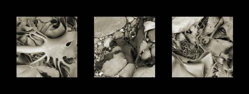 Kelp Tryptych by neubauten