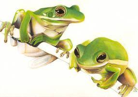 Frogs +Color+ by JLGribble