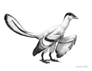 Archaeopteryx sp. by Osmatar