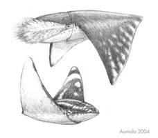 Wingsquids by Osmatar